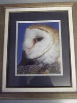 Owl Portrait in Fort Carson, Colorado